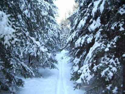 Ski trail, UNB Woodlot
