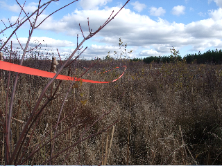 Marking the 80 metre buffer to protect Corbett Marsh from the Costco.